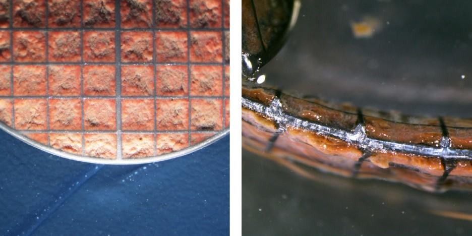 Z-carriers demonstrating a controlled biofilm thickness of anammox bacteria - top view (left) and cross section (right). © AnoxKaldnes, 2020